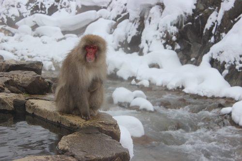 温泉と雪と猿